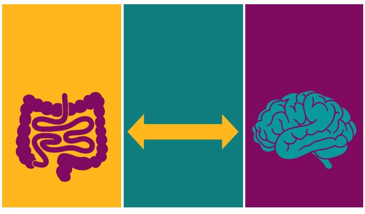 intestino e cervello si condizionano