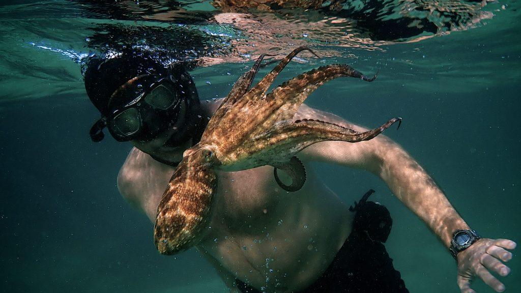 My Octopus Teacher NETFLIX